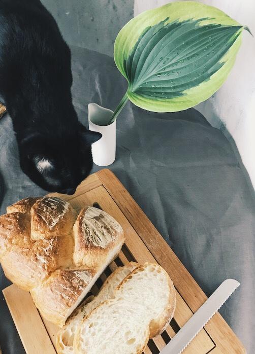 ホスタとパン