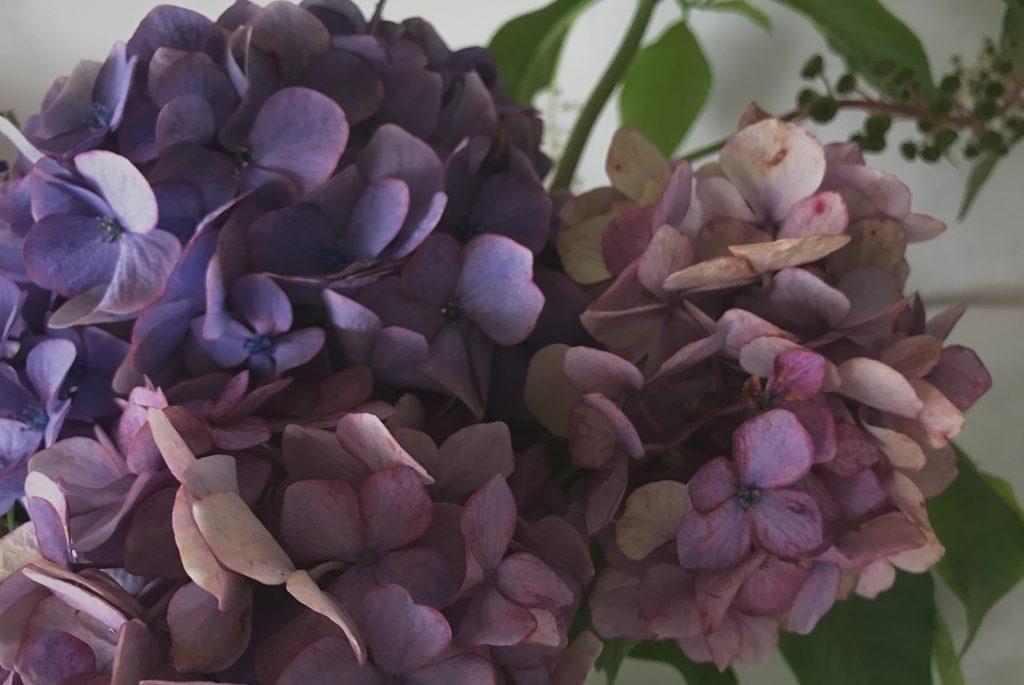 アンティークあじさいの紫