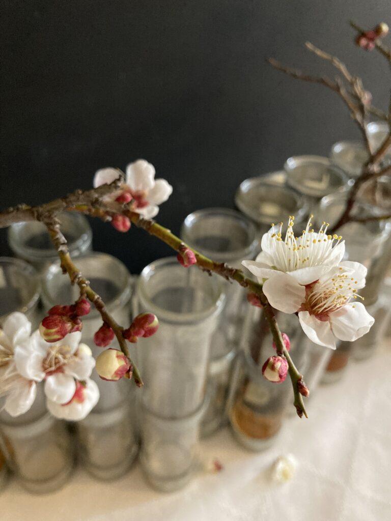 ツェツェの四月の花器と白梅