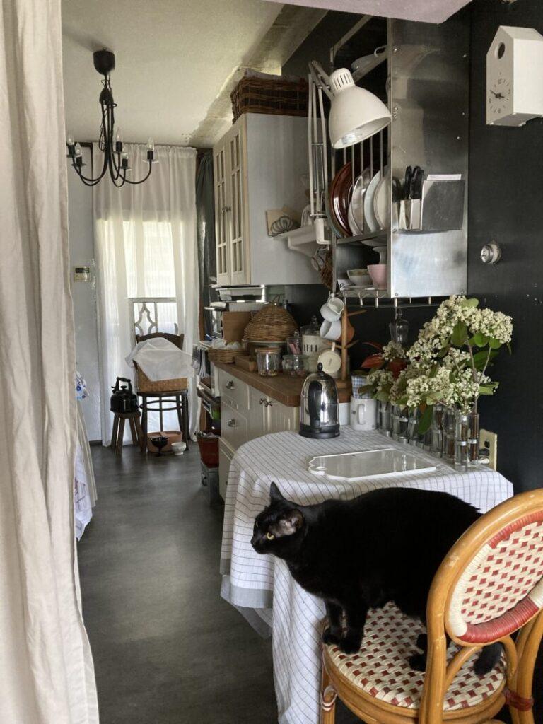 パリ風キッチントレッドロビンの花