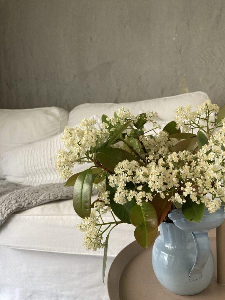 リビングのレッドロビンの花