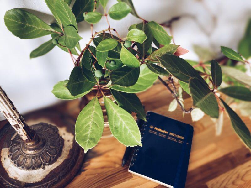 ヘンリーツタとロルバーンの手帳