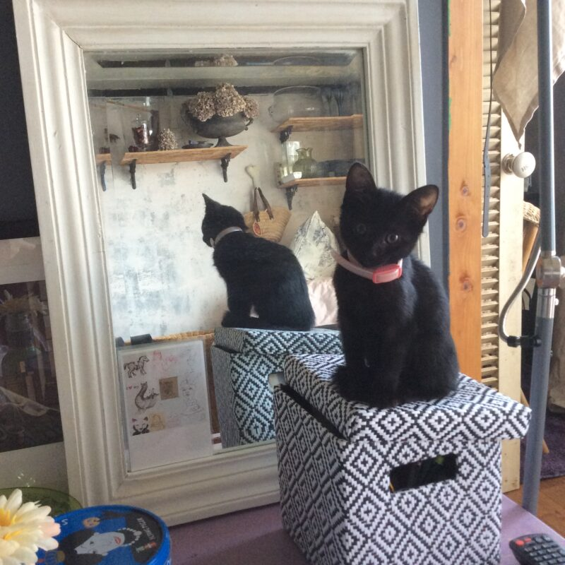 パリ風リビングの鏡に映る子猫時代のくろねこニケ