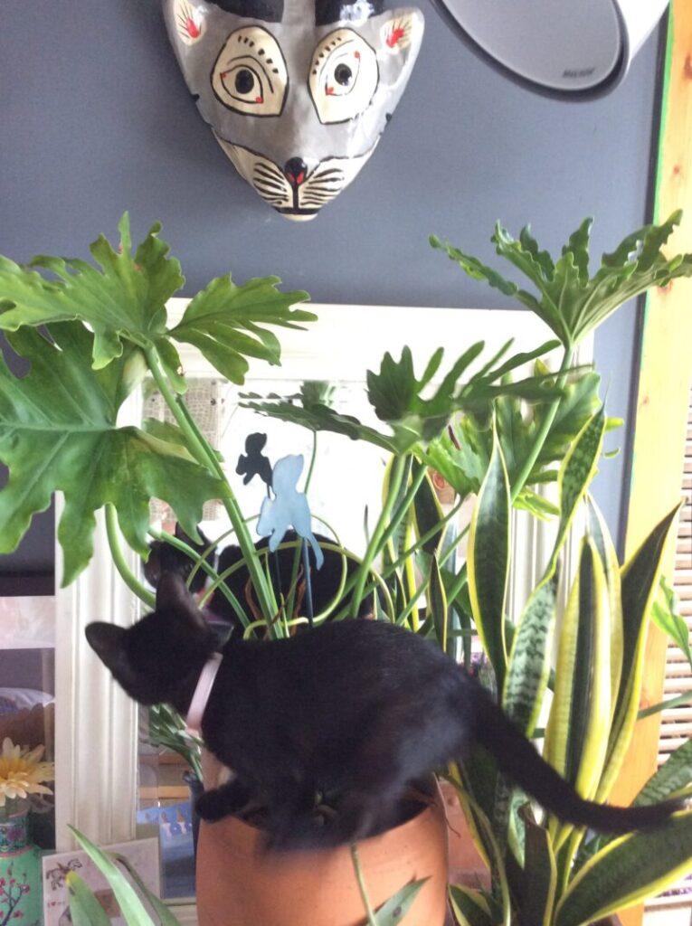パリ風リビングの子猫時代のくろねこニケとお面と観葉植物のモンステラ